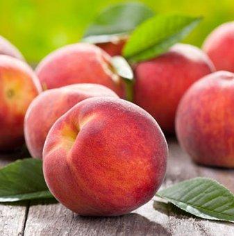 Праскова сорт Хале / Peach Hale /...