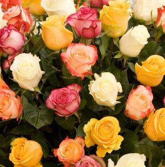 Рози Смесица - Roses Mixed